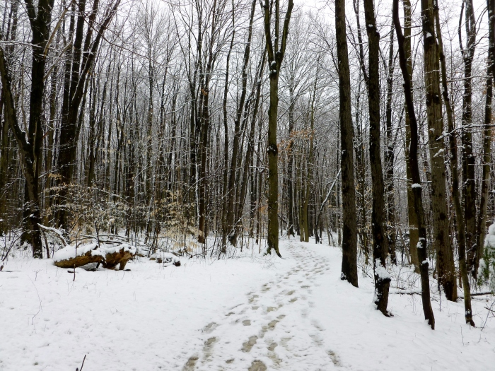 Walking down a trail