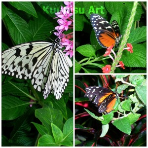 butterflies watermarked