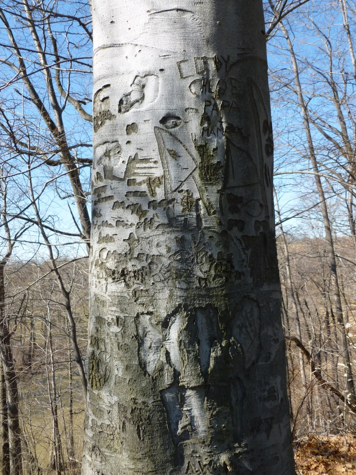 It looks like the tree growth is swallowing the carvings.