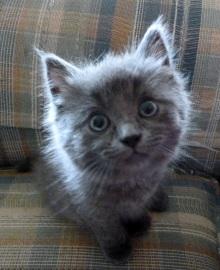 Ohai! I'm cute.