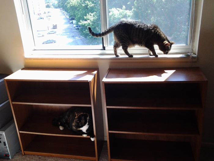 As I said, Tag and Perky helped me move my book shelves. LOL!