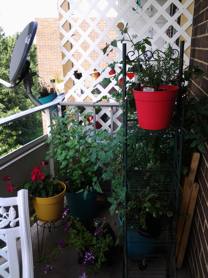 Here's what one half of my balcony looks like now since I had to re-arrange when the tomato plant became huge.