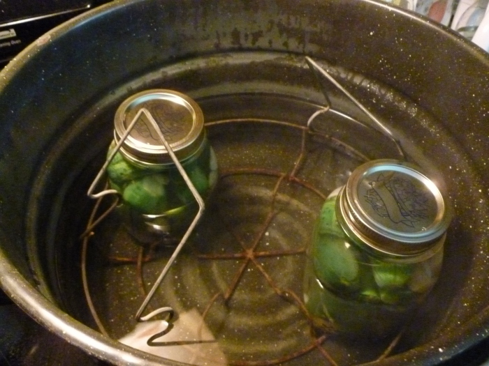 Pickles getting ready to be boiled.