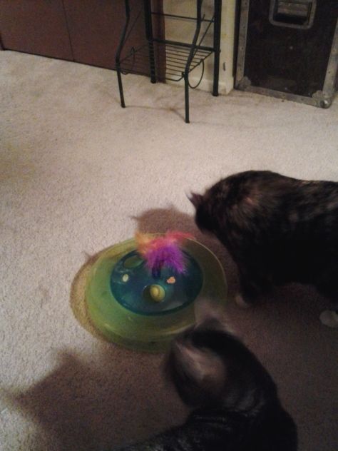 Kitties playing with their new toy.