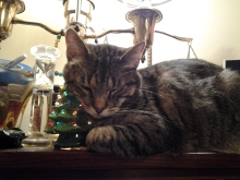 Tag REALLY loves this tree.  Every time he sleeps up there, he ends up like this.  This also became my Christmas card this year.