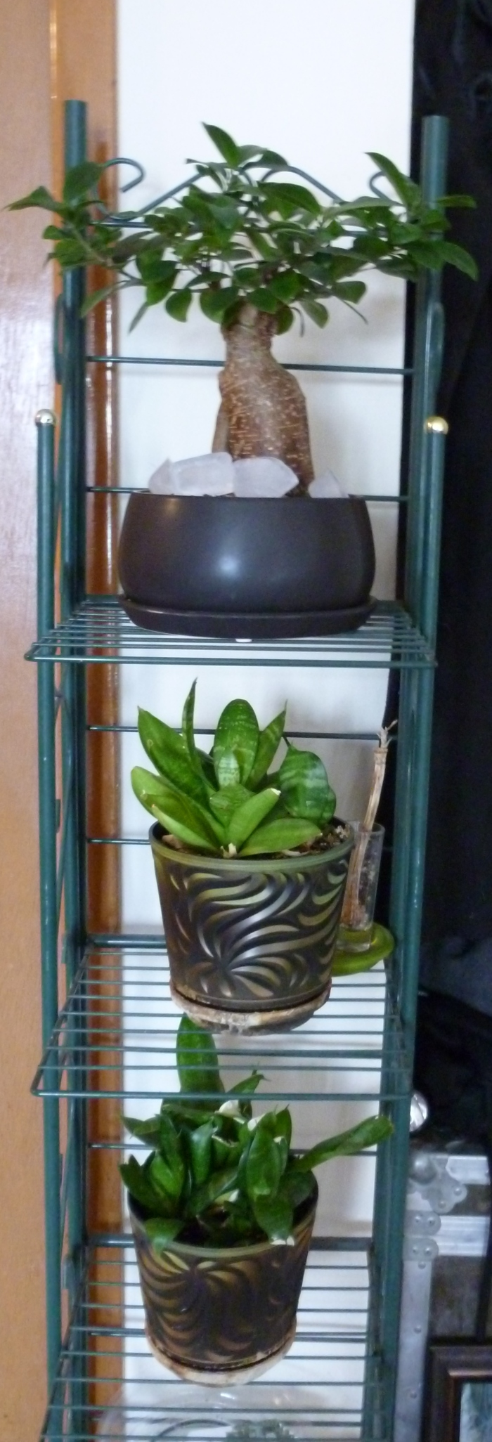 This is my narrow plant rack.  It's perfect for my plants that are sensitive to light.